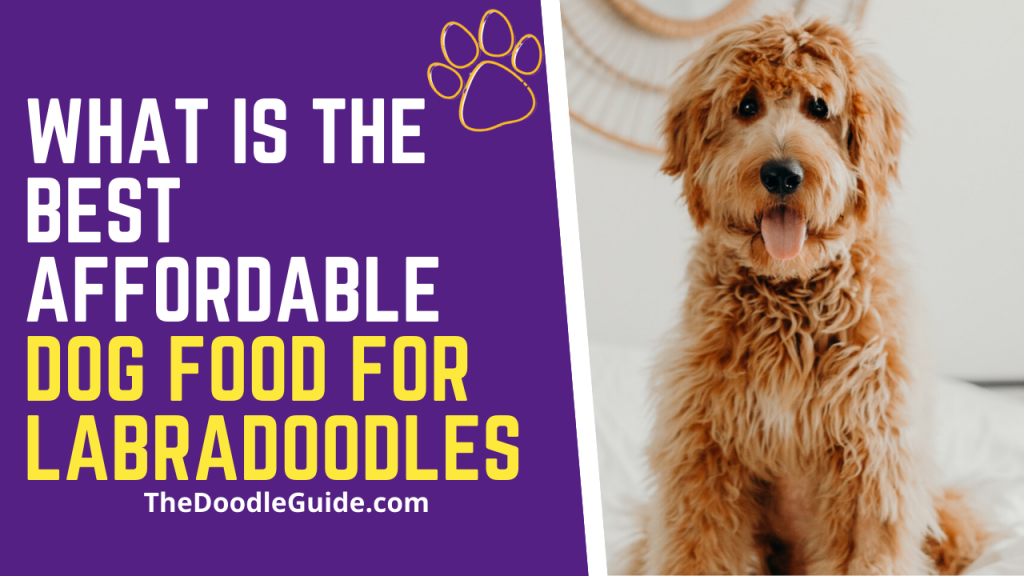 What is best affordable dog food for Labradoodles-thedoodleguide.com