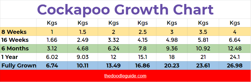 How Much Do Cockapoos Weigh - thedoodleguide.com