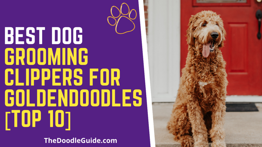 best dog grooming clippers for goldendoodles-thedoodleguide.com