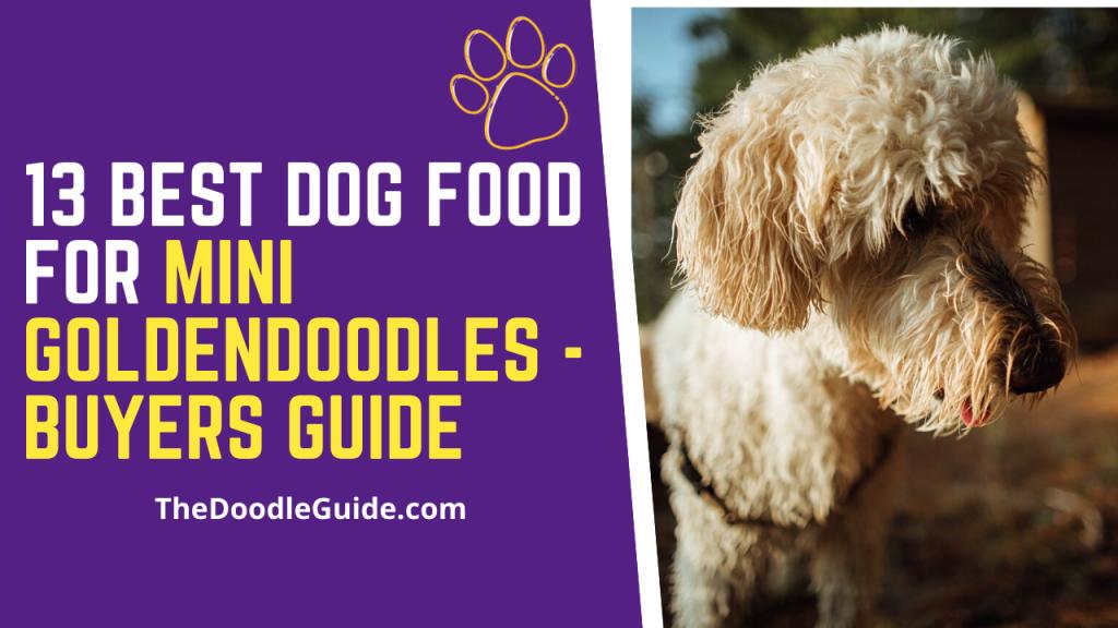 best dog food for mini goldendoodles-thedoodleguide.com