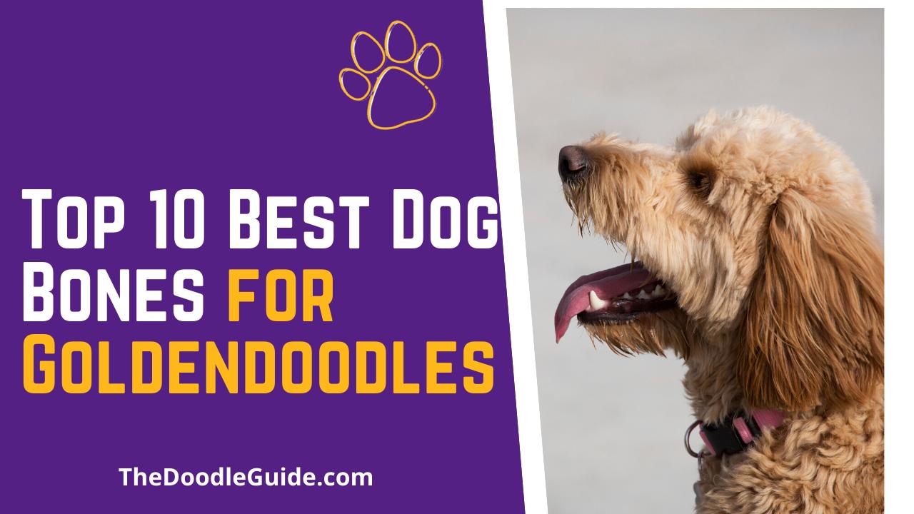 Top 10 Best Dog Bones For Goldendoodles The Doodle Guide