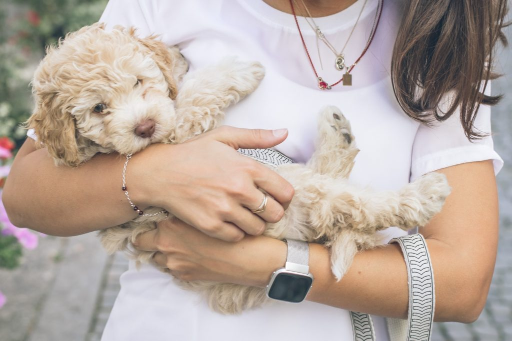How much food does a Cockapoo puppy need - TheDoodleguide.com