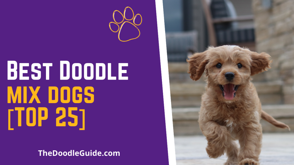 best doodle mix dogs - TheDoodleguide.com