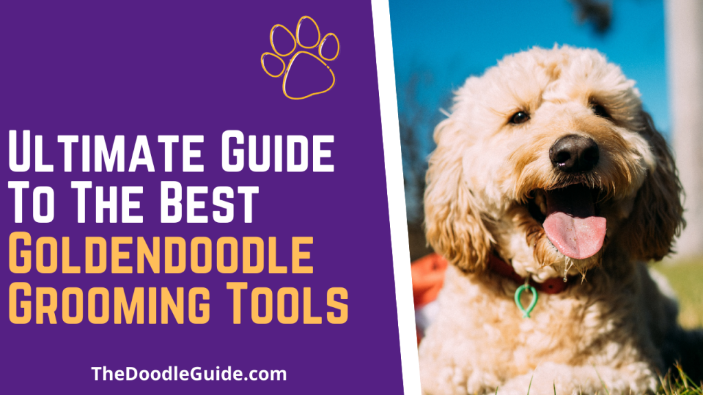 best goldendoodle grooming tools - thedoodleguide.com