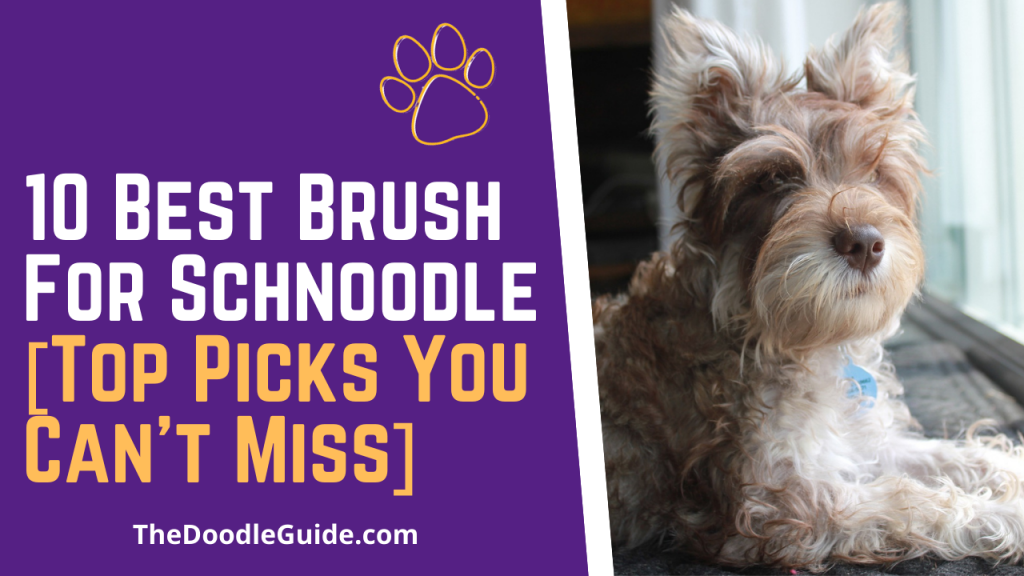 best brush for schnoodle - TheDoodleGuide.com