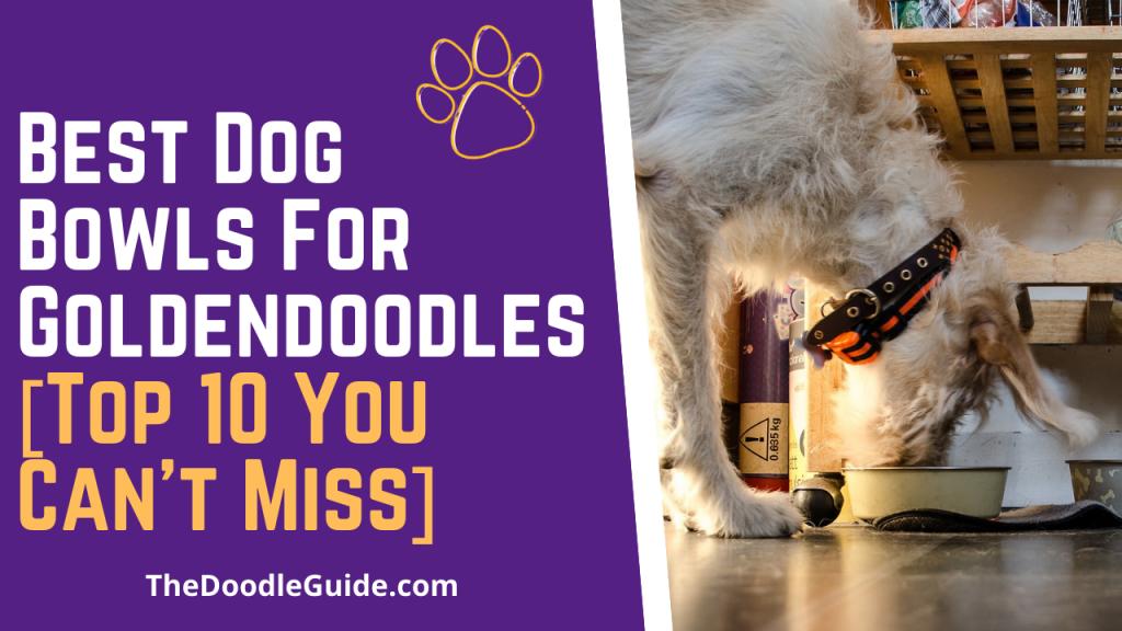 best dog bowls for goldendoodles - TheDoodleGuide.com