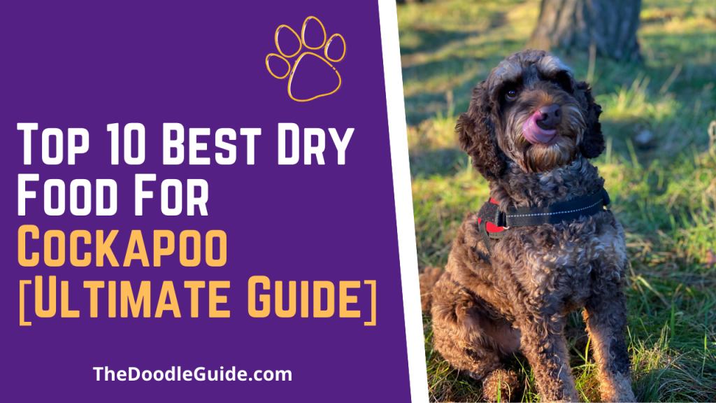 best dry food for cockapoo - TheDoodleGuide.com