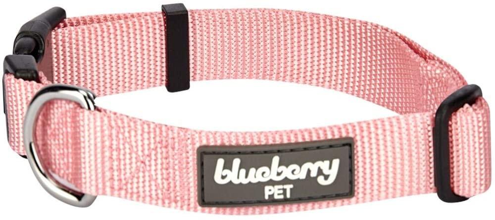 blueberry pet classic dog collar