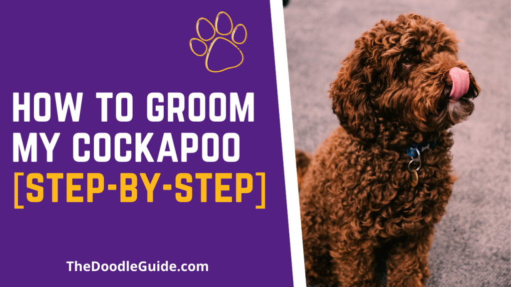 how to groom my cockapoo - Thedoodleguide.com