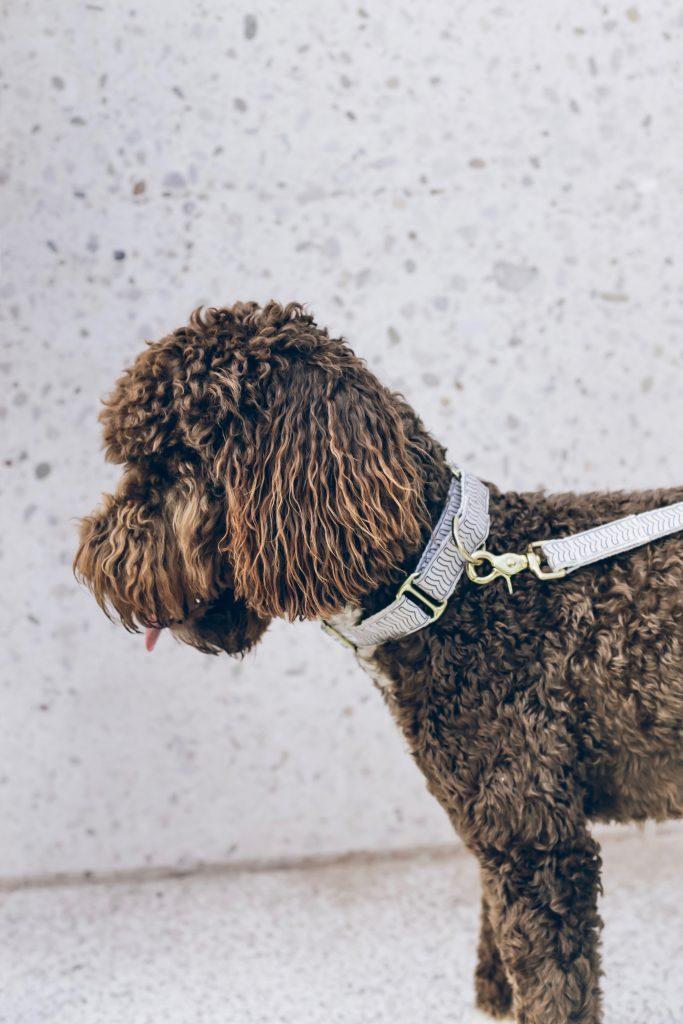best dog brush for goldendoodle