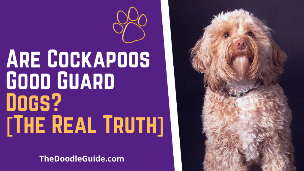 are cockapoos good guard dogs - TheDoodleGuide.com