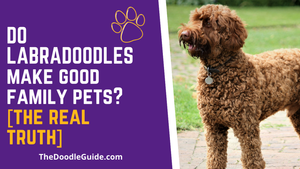 do labradoodles make good family pets - thedoodleguide.com