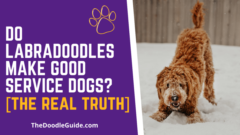 do labradoodles make good service dogs - thedoodleguide.com